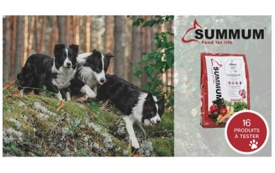 Testez Summum Original avec votre chien !